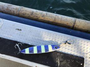 鏡牙ジグ ベーシック CHパープルゼブラで釣られました!