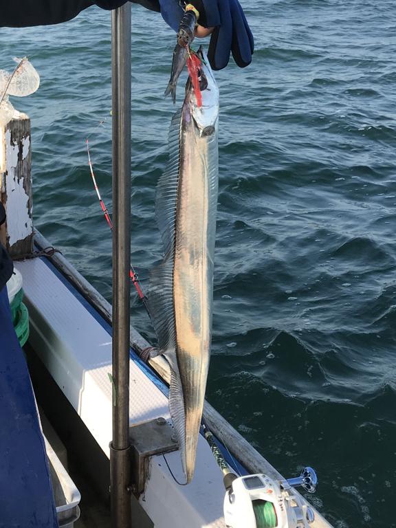 11月6日(月)の釣果(タチウオ・シログチ)