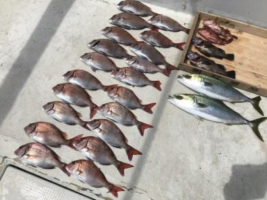 2017-5-19-真鯛、船中20匹・ハマチ2匹ほか