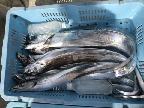 ●小潮 太刀魚狙い @ 明石市   兵庫県   日本