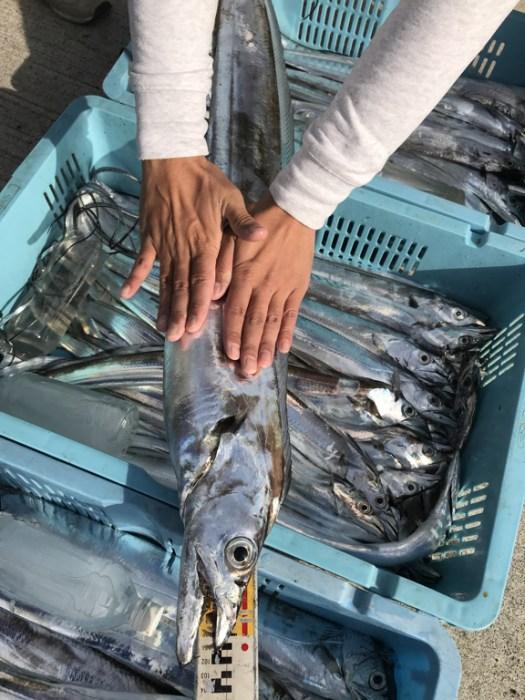 2018-12-1-太刀魚