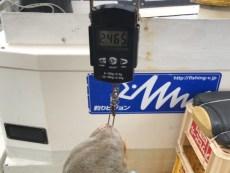 2019-4-29-マダコ2.5kg