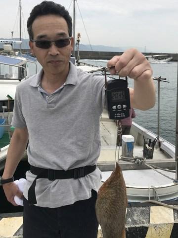 2019-7-5-マダコ2.0kg