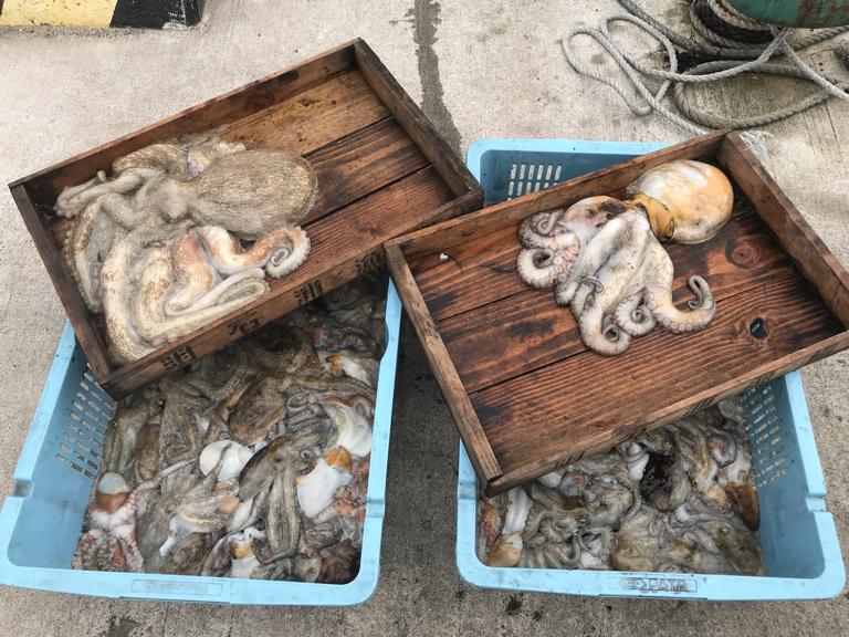 7月22日(月)の釣果(マダコ2.7kg含む船中91杯)
