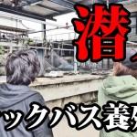【激震】ブラックバス養殖業者に潜入【外来魚】| ツリデルタトーキョー