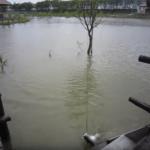 【釣り動画】マニア必見?物干し竿でアカメが釣れた!
