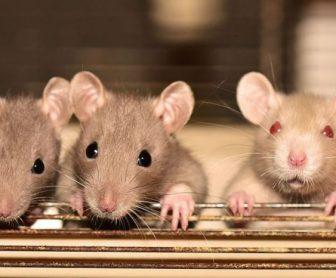 شركة مكافحة فئران بالجبيل 0599220282 وتركيب احدث الاجهزة لطرد الفئران