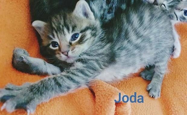 joda-text-gr
