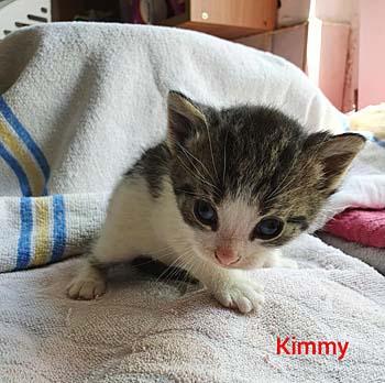kimmy20