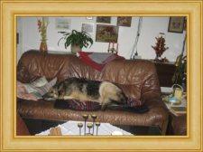syrius-Z-sofa