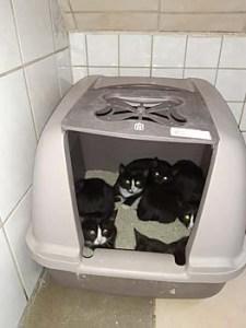Unsere Stubentiger wünschen sich neue Katzentoiletten!