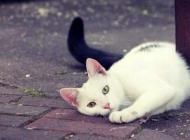 Katze vermisst in Himmelpforten