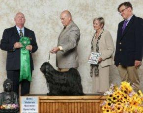 Best Veteran winner photo with judge and handler