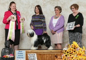 Futurity Best Puppy winner photo with judge and handler