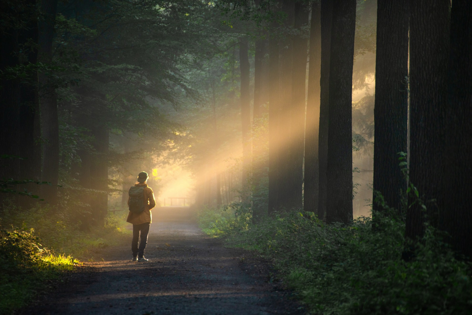 Person standing on a hiking path in the woods with sunlight pouring through the trees on them.
