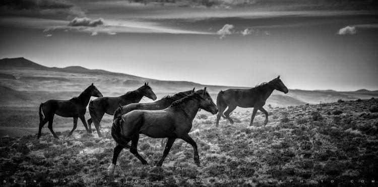 Patagonia Horses ©Sean Bagshaw