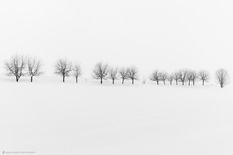 Seventeen Trees