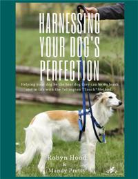 A white and tan Saluki dog stands with a blue Tellington TTouch Harmony Harness and Sliding Leash set.