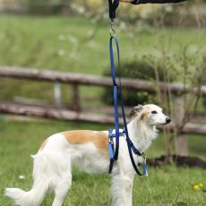 Tellington TTouch Harmony Dog Harness system