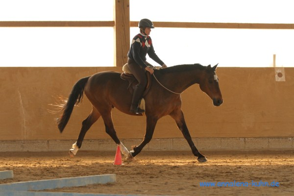 Riding in an indoor arena with a Liberty lariat neck ring.