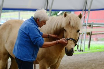 Robyn Hood uses a TTouch neck release on her Icelandic horse