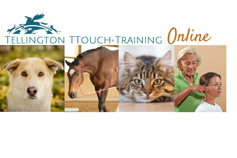 Tellington TTouch Training Canada