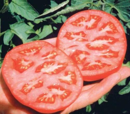 Tomato Better Boy Hyb - Qty. pot