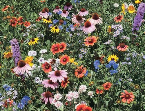 Wild Flower Mix - Qty. grams