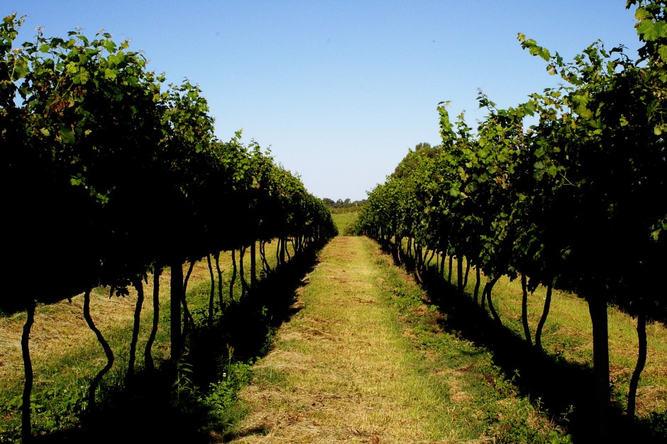 wine-yards-1324683