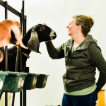 Annette Coursey milking image