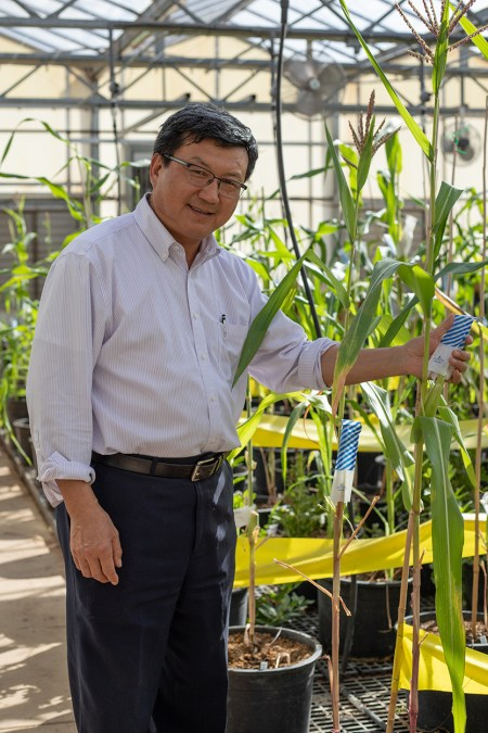 Wenwei Xu standing in his corn breeding lab.