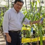Wenwei Xu standing in his corn breeding lab.