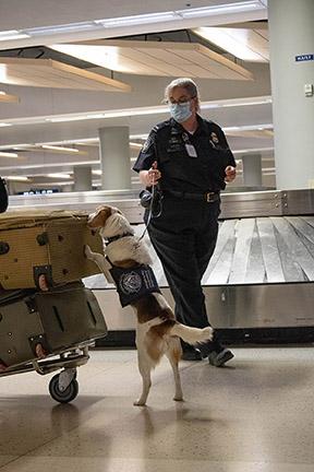 Jordan and 'Gadget' searching passenger bags.