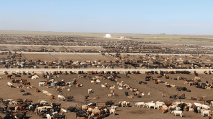 Cactus Feeders is the world's largest privately owned cattle feeding operation.
