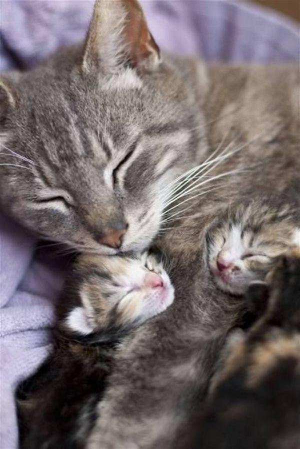 15 фото мам и их маленьких копии - БАгиня