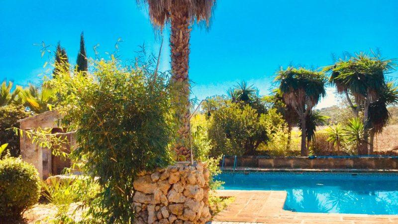 palmera+ducha+piscina+palm+pool+Schwimmbad