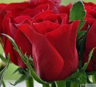 32-Rose_543234_3197191227838