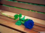 44-Rose_931566_5322678841845