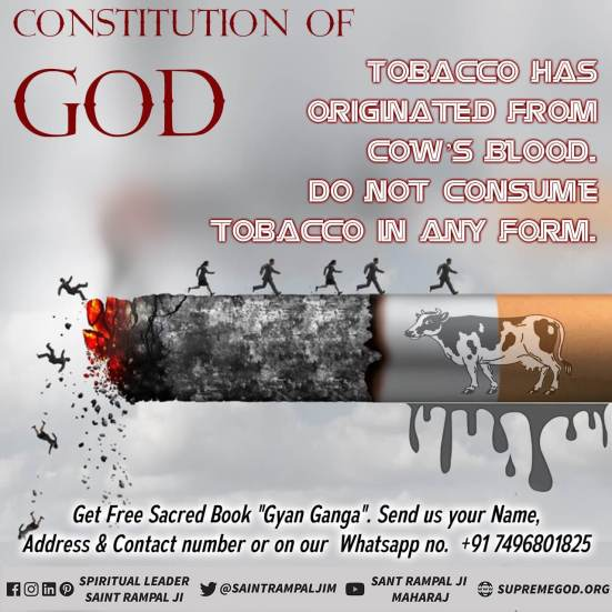 God Constitution eng (17)