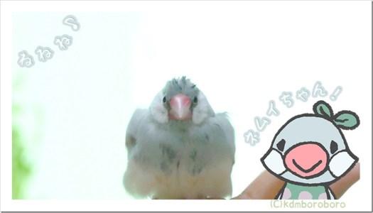 今年もネムイちゃんが一番かわいかったで賞【チュベテレアワード2020】
