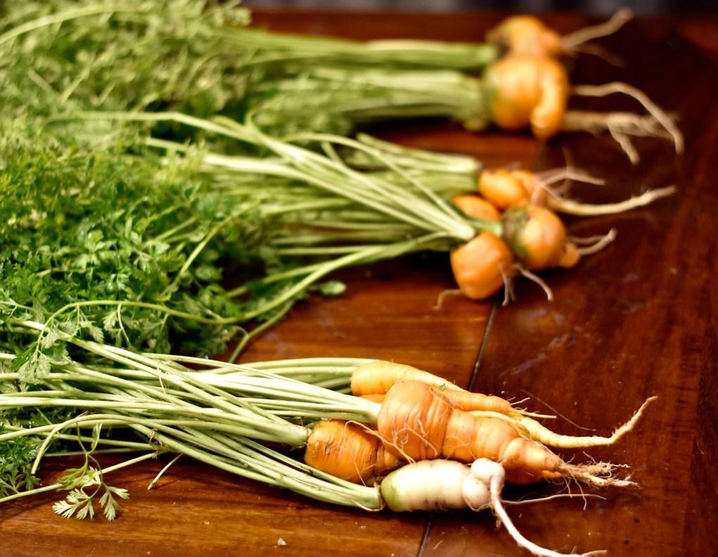 Inside grown carrots.