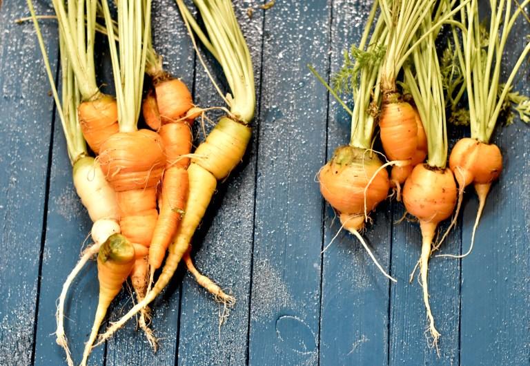 Some crazy looking indoor grown carrots