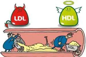 Valores normales de trigliceridos y colesterol HDL y LDL