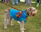 This poor dog looked so overheated, but I loved the needle felting!