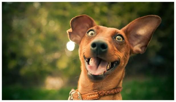 Resultado de imagem para cachorro e dono felizes