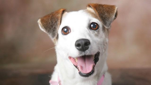 como fazer seu cachorro feliz