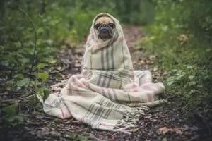 Cachorros Sentem Frio? Com a Mesma Intensidade que a Gente?