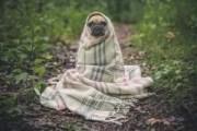 Cachorros Sentem Frio Como a Gente? Quais São Mais Friorentos?