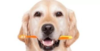 Como Evitar Mau Hálito Muito Forte do Cachorro?