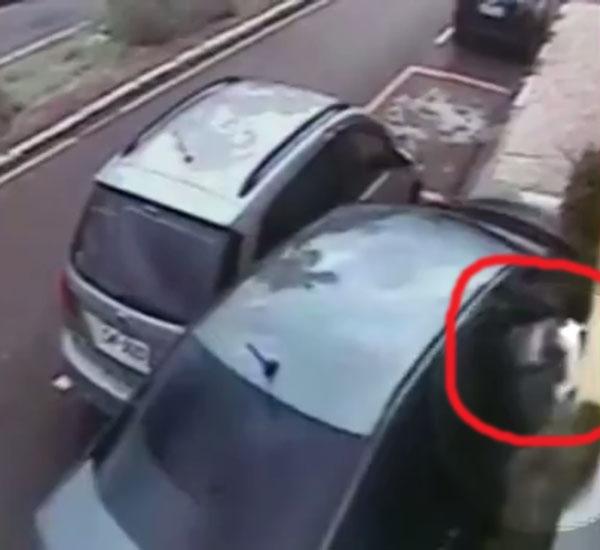 Shih Tzu sobrevive após ser arremessado pela janela durante acidente de carro
